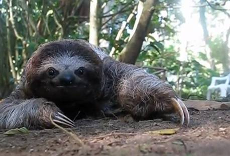 Daily Comeback: When Sloths Attack | RTM - RightThisMinute