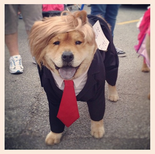 the 15 most ridiculous costumes for your dog this
