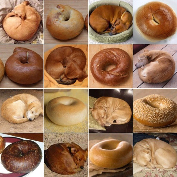 puppy_or_bagel the internet wins again with 'animal or food' memes rtm
