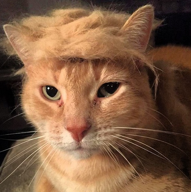 Image result for trump your cat