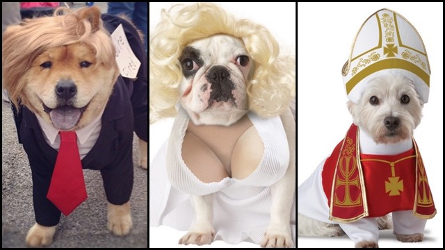 The 15 Most Ridiculous Costumes For Your Dog This Halloween | RTM - RightThisMinute & The 15 Most Ridiculous Costumes For Your Dog This Halloween | RTM ...