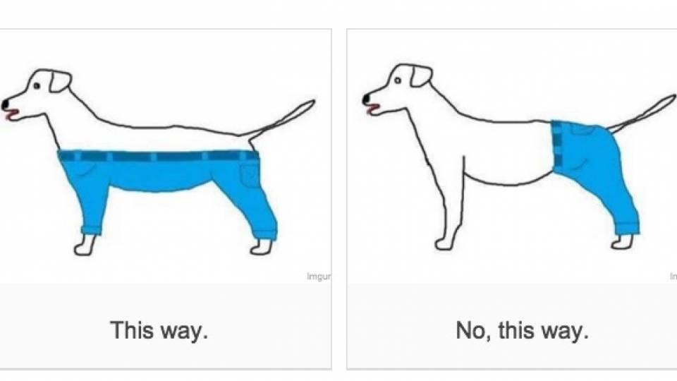 Dog Wore Pants Like This