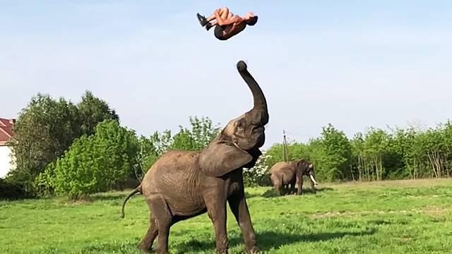 adorable elephant acrobatics rtm rightthisminute