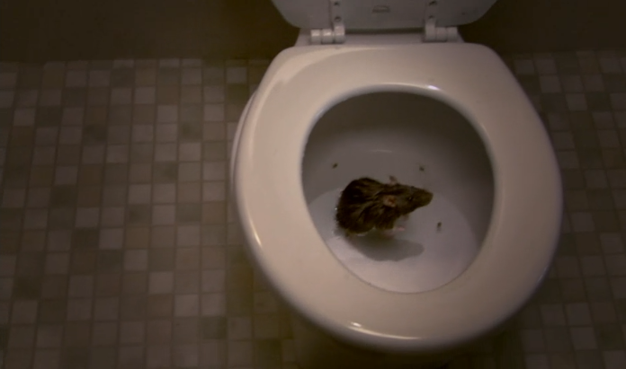 Nobody Likes a Rat! Especially in Your Toilet | RTM - RightThisMinute
