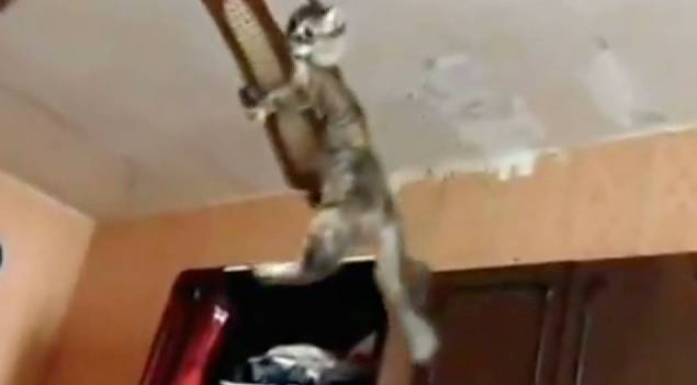 Cat accepts the ceiling fan challenge rtm rightthisminute aloadofball Choice Image
