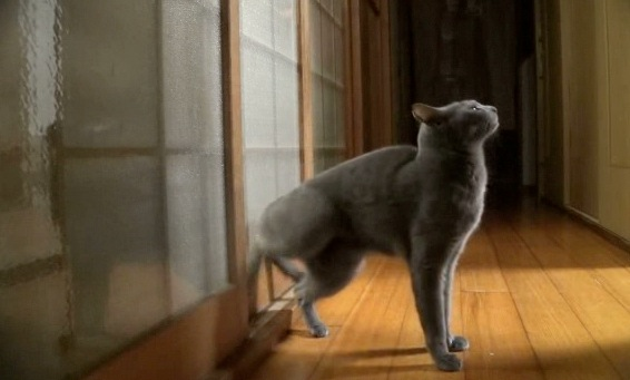 Just A Cat Knocking On A Door Rtm Rightthisminute