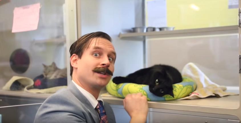 Calgary Humane Society Used Cat Sale