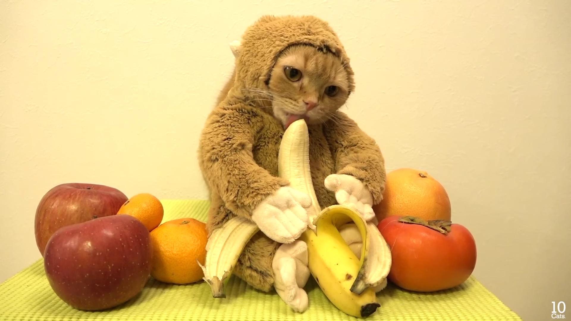Cat In Monkey Suit, Mini Pig Eats Dog's Food & Puppy Walks