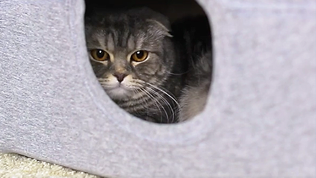 & How To Make A Cute Tent For Your Favorite Cat   RTM - RightThisMinute
