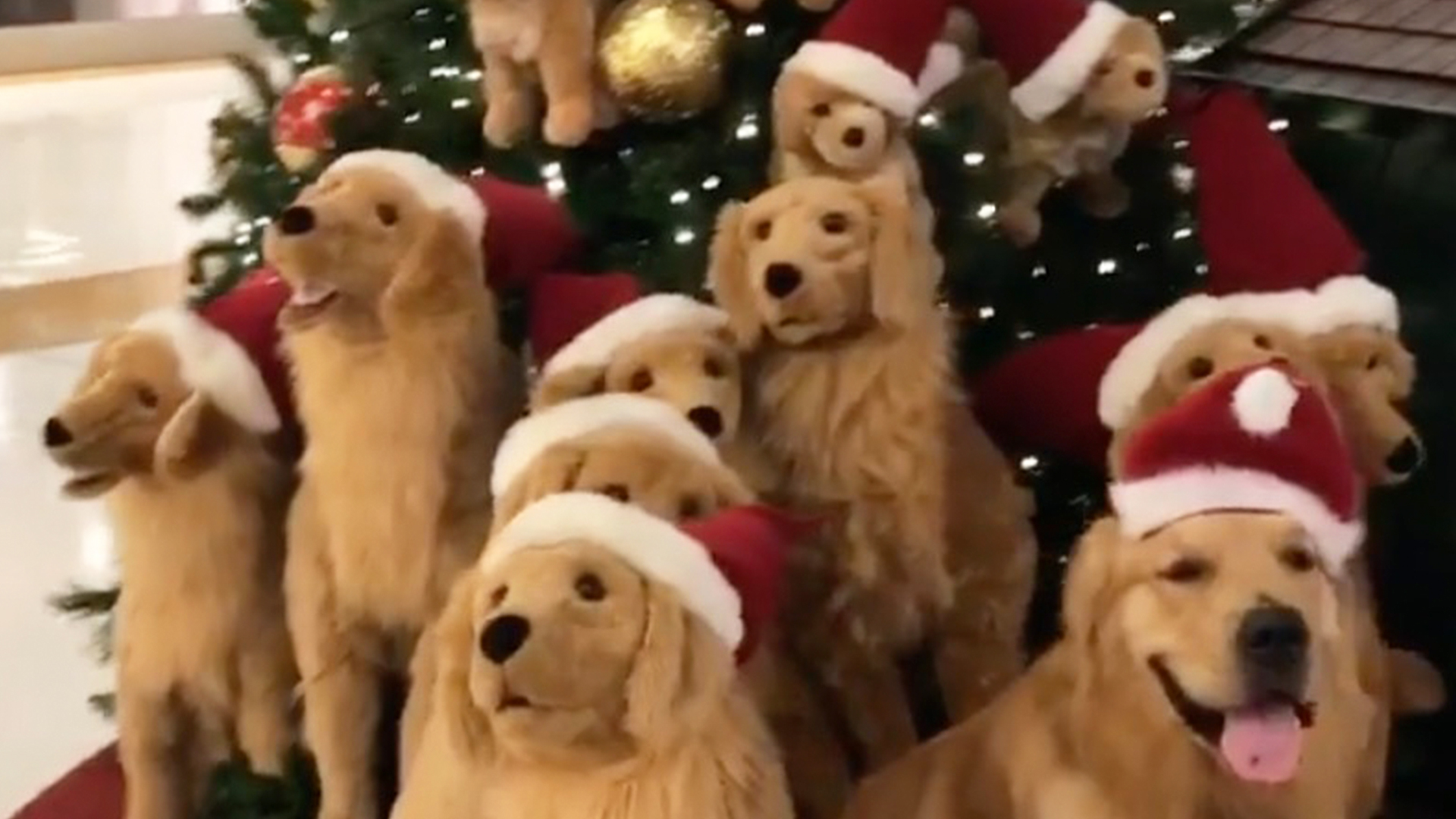 Christmas Dog.Spot The Real Christmas Loving Dog Rtm Rightthisminute