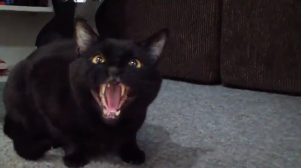 Cash And Go >> Incredible, Amazing (and a Bit Creepy) 'Singing' Cat ...
