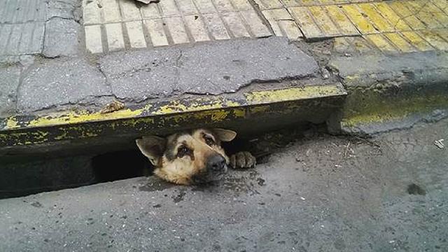 Rescuers Tear Up Sidewalk To Free Sewer Dog Rtm