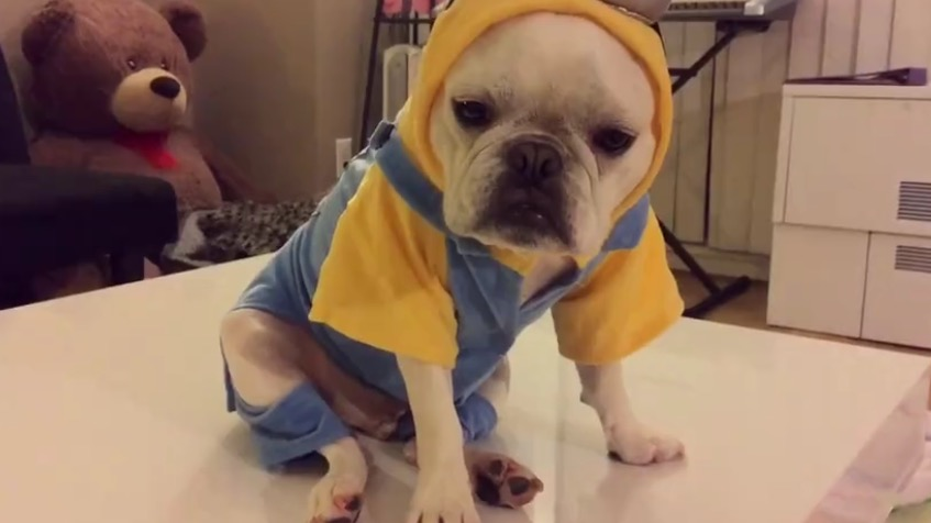 Youu0027ve Never Seen A Dog in a Minions Costume Before? | RTM - RightThisMinute & What? Youu0027ve Never Seen A Dog in a Minions Costume Before? | RTM ...