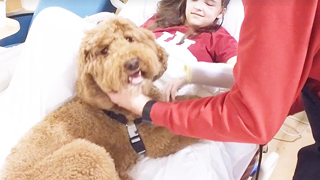 Quigley Celebrates 5 Years As A Pet Therapy Dog | RTM