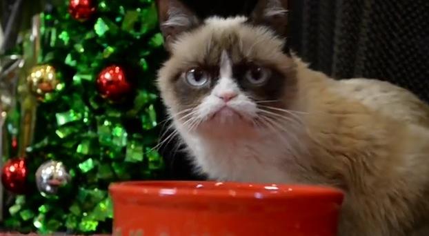 Famous Pets Grumpy Cat