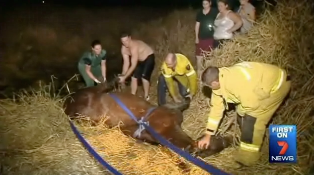 Rescue Crews Work to Save Horse From Creek | RTM ...