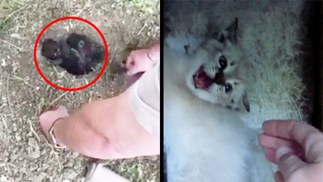 Someone Buried These Cats Alive & 'I Am Kitten, Hear Me Roar'   RTM