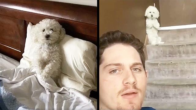 Hasil gambar untuk quincy dog and patrick