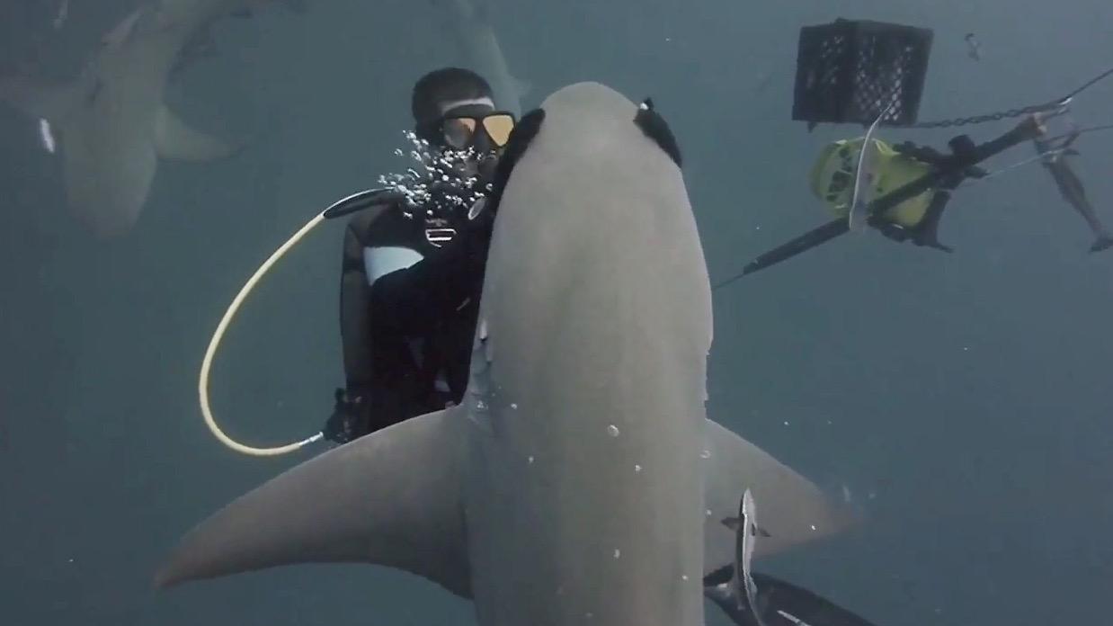 Shark dating site